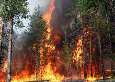 Meşələri yandıran iki qardaş saxlanıldı